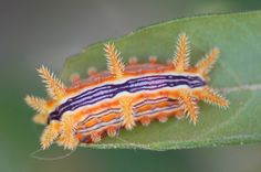 beautiful caterpillar - Buscar con Google