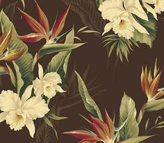 White Orchid Wallpaper $25.99