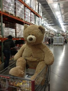 costco : Big Bear.... the store that has everything you need. Definitely shopping here when im older. I love costco