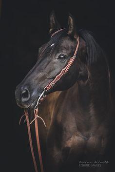 """HE""""S MINE............#horses"""