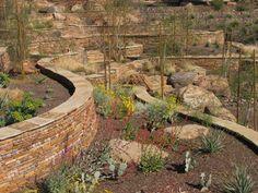 desert plants for landscaping in arizona back wall - Bing images Low Water Landscaping, Landscaping With Boulders, Palm Trees Landscaping, Hillside Landscaping, Front Yard Landscaping, Steep Gardens, Landscaping Supplies, Landscaping Ideas, Arizona