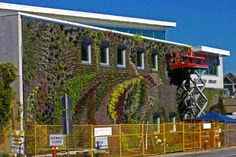Installation of over 10,000 plants for the outdoor Semiahmoo Public Library and Royal Canadian Mounted Police Facility living wall in Surrey, Canada, designed and built by Green Over Grey.