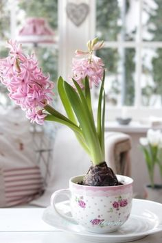 All Things Shabby and Beautiful- hyacinth