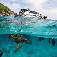 Симиланские острова  именно там самая большая вероятность встретить в море морских черепах и поплавать вместе с ними. Кстати они закрываются через три недели на полгода  успевайте посетить эту красоту!!Кто хочет на экскурсии пишите в Директ или 66862717870 (Viber/WhatsApp) - Антон #пхукет #тайланд #карон #ката #катаной #тай #пхукет2016 #пхипхи #патонг #андаманскоеморе #бангтао #найхарн #бангла #камала #сурин #найтон #найянг #майкхао #likeforlike #like4like #follow4follow #vsco #vscocam by…