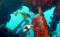 Diving the Benwood near Key Largo, Florida,Photo Greg Grimes