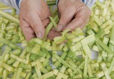 Cruces de palma para el Domingo de Ramos / Palm crosses for Palm Sunday, by @borisalas