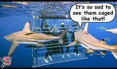 Sympathetic sharks are often misunderstood. ;) #diving #scubadiving