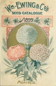 Seed catalogue, 1899 : Ewing, William & Co. (Montreal, Quebec) : Free Download…