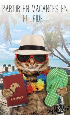 Partir en vacances en Floride... Le passeport, les tongs... Tout est prêt pour des vacances de rêve à Orlando, Miami, les Keys, Naples, Fort Myers, les Everglades, etc. #Floride #Chat #Vacances