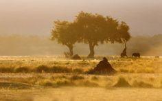 TIGER und TAJ 2014 - Eine Fotoreise nach Indien, 21 Tage
