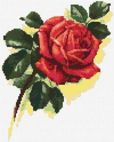 free chart rose: