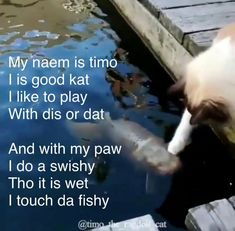 Touch da fishy