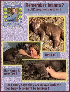 Remember Ivanna? Adopted around Christmas  #Update #WCR #wingingcat #SecondChance #Ivanna #adopt #sheltercat #kittens #cats #Georgia #Atlanta #rescue