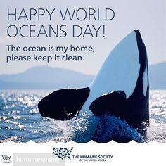 It's #WorldOceansDay !! Let's celebrate by working to keep our oceans and the incredible animals who call it home safe  @Regrann from @humanesociety -  #brightwellaquatics
