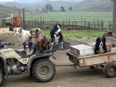 Brad and Kathy Warrens working ranch dogs
