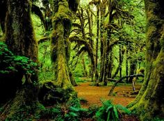 The Enchanting Forests of Olympic National Park ~ located in Washington state