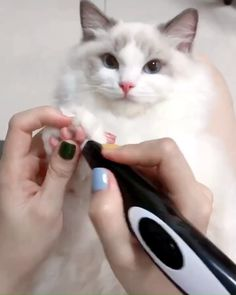Cat Electric Clipper Good temper cat-i guess that your cats will kill y Cute Cats And Kittens, Ragdoll Kittens, I Love Cats, Crazy Cats, Kittens Cutest, Funny Animal Videos, Cute Funny Animals, Cute Baby Animals, Animals And Pets
