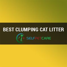 Ready to know about the best clumping cat litter of this world? This article is going to help you to select top rated clumping cat litter of this world Marketing, Things To Sell, Cats, Gatos, Cat, Kitty, Kitty Cats