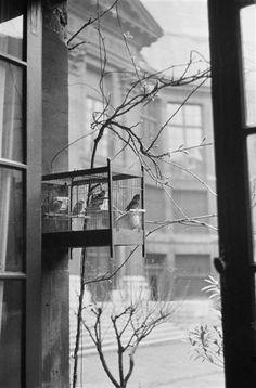 André Kertész, L'Académie Française, 1929. Anything by Kertész is pretty much an instant reblog around these parts. Thank you, arsvitaest.