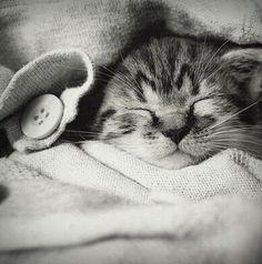 Cute kitten all snuggled up :)