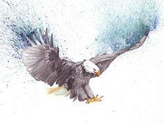 \u201cBald Eagle\u201d https://www.behance.net/gallery/53154567/Bald-Eagle
