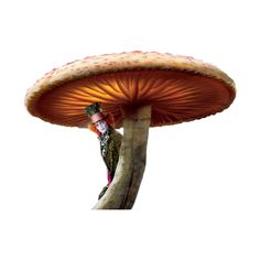1.png ❤ liked on Polyvore featuring alice in wonderland, mushrooms and wonderland