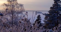 This post shows you Tampere winter on a walk in an extremely cold weather. I walked by the Tammerkoski rapids and saw frozen lakes from the Pispala ridge. Lake Run, Winter Temperature, Cozy Cafe, Take The Stairs, Winter Walk, Pretty Beach, Beautiful Forest, Forest Park, Extreme Weather