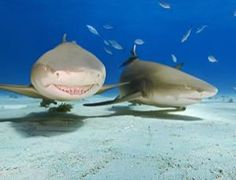 Can you guess which species of #sharks likes the company of their peers?