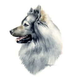 EURASIER Dog Art Print Signed by Artist DJ Rogers by k9artgallery