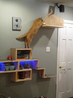 Cat Adventure and Escape Wall: 12 Steps (with Pictures)