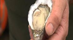 Image result for yorke peninsula oysters