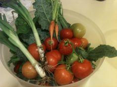 Home grown in an Arcadia backyard, you say tomaato  I say tomato.