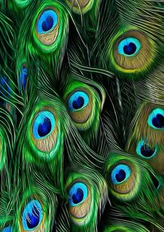Peacock teaches us pride and enjoying all life's flavours and colours. Often people who work in entertaining business may have peacock as their totem animal. It is showing his/her colours fully to the world. Peacock Colors, Peacock Feathers, Peacock Pattern, Peacock Nails, Peacock Jewelry, Peacock Design, Peacock Blue, Karen, Go Green