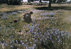 Picking Wild Flowers, Santa Cruz c.1927