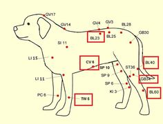 Relieve Your Pets Back Pain with Acupressure. All natural pet care