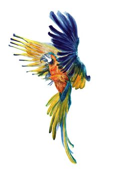 papagei, parrot, bird, birds, watercolor, painting, drawing, kirasene, falling bird, vogel, vögel