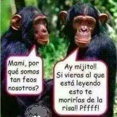 Funny Spanish Memes, Spanish Humor, Crazy Funny Memes, Funny Jokes, Funny Happy Birthday Wishes, Funny Birthday Cards, Funny Phrases, Love Phrases, Memes Humor