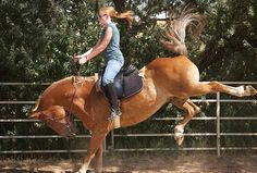 Great article. Beginner Safe Horses | Horse Training from Horse Collaborative