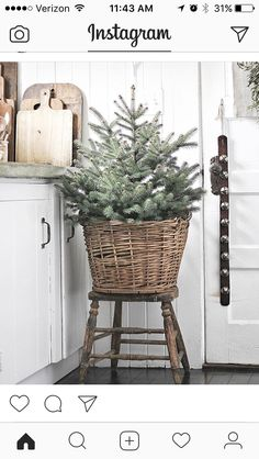 """Simple Christmas Decorating Ideas """"One of my go-to holiday decorating traditions is having jingle bells on the inside of my front door. The welcoming sound instantly transports my family and guests into the holiday spirit. Natural Christmas, Noel Christmas, Merry Little Christmas, Winter Christmas, Christmas Wreaths, Christmas Crafts, Christmas Tree In Basket, Xmas Tree, Christmas Recipes"""