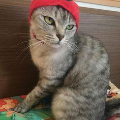 ♡ みんなおはにゃ😽リンゴンちゃんです🍎 今日はママの誕生日にゃ🎂お祝いにゃ🎉😼 27歳になったらしいにゃん〜😻❤️ そして、ゴンちゃんは猫カビが再発したと 思ってましたが勘違いだったようです🤣 やはり2年も真菌だったので敏感に なりすぎてました。でもよかった😭❤️ なのでやっとねこフルーツちゃんできた✨ リンゴとスイカが当たったので次はスイカ🍉 今日は猫にお祝いしてもらいます🙋🎉🎂 #cat#neko#ねこ#猫#ネコ#キャット #日本猫#雑種猫#アメショもどき#愛猫 #ゴンちゃん#サバトラ#にゃんこ#美猫 #みんねこ#にゃび#はにぺと部#picneko #にゃんだふるらいふ#ピクネコ#ねこ部 #ニャンダフルライフ#ペコねこ部#ネコバカ #ニャンスタグラム#ねこすたぐらむ #ウェブキャットショー2#ウェブキャットショー #極楽ねこカレンダー#ねこフルーツちゃん
