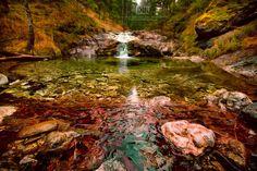Forest Life by Dariusz Łakomy