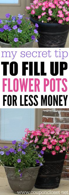 How to Save money on Flowers for your Garden! This secret tip helps fill up your flower pots without spending a lot of money! Try this amazing frugal tip today! - Home Garden Container Flowers, Flower Planters, Container Plants, Flower Pots, Succulent Containers, Fall Planters, Flower Seeds, Succulents, Shade Flowers