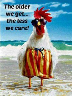 Funny happy birthday wishes animals Ideas Birthday Wishes Funny, Happy Birthday Quotes, Birthday Greetings, Happy Birthday Chicken, Birthday Humorous, Funny Happy Birthday Images, Birthday Sayings, Humor Birthday, Sister Birthday