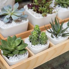 How to Avoid Killing Your Indoor Succulents: One of the quickest ways to kill indoor succulents is to water them incorrectly. Succulents use their thick, fleshy leaves to store water. Propagate Succulents From Leaves, Cacti And Succulents, Planting Succulents, Cactus Plants, Propagating Cactus, Real Plants, Succulent Care, Succulent Terrarium, Terrariums