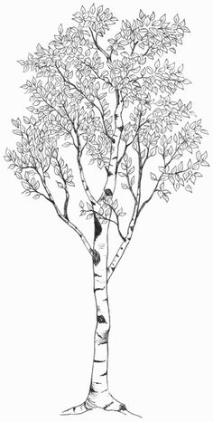 Tree Black And White Tattoo Silhouette 16 Ideas For 2019 Tattoo Silhouette, Tree Silhouette, Illustration Botanique, Tree Illustration, Tree Tattoo Designs, Tree Designs, Tattoo Ideas, Birch Tree Tattoos, Tree Roots Tattoo