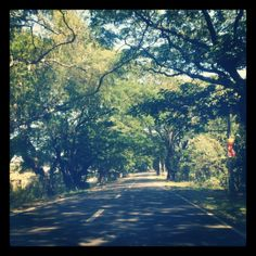 Tree shaded road in Tarlac, Philippines