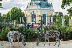 Tiergarten Schönbrunn, Zoo in Vienna Salzburg, Budapest, Schönbrunn Zoo, Vienna Zoo, Tiergarten Schönbrunn, Zoo Architecture, Kaiser Franz, Hallstatt, Underwater Animals