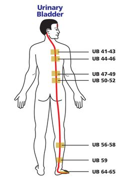 Meridian Acupuncture, Acupuncture Points, Acupressure Points, Cupping Therapy, Massage Therapy, Meridian Energy, Traditional Chinese Medicine, Yoga, Qigong