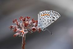 8 Tips for Photographing Butterflies http://digital-photography-school.com/8-tips-for-photographing-butterflies/
