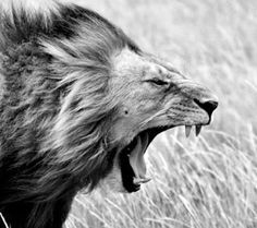 """""""...I came in as a lamb, but I intend to leave like as a lion..."""""""